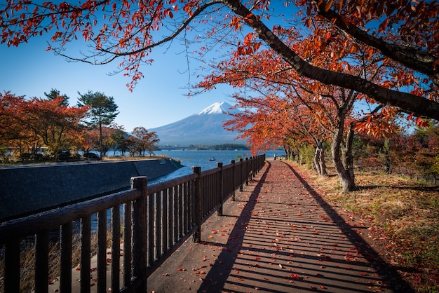 Mt. fuji over lake kawaguchiko with autumn foliage at daytime in fujikawaguchiko, japan.