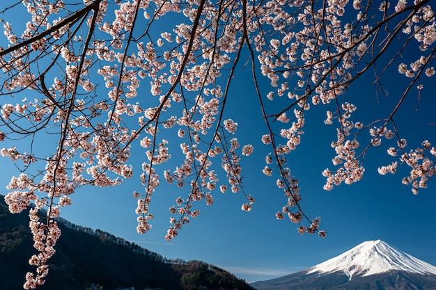 Mt. fuji in the spring time with cherry blossoms at kawaguchiko fujiyoshida, japan.