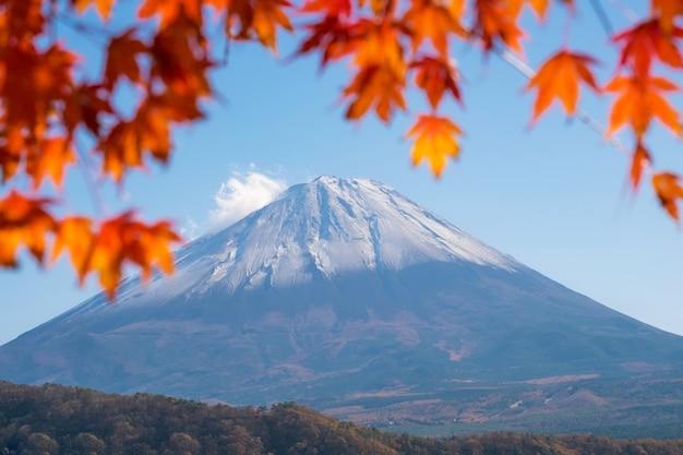Mt. fuji volcano japan symbol with autumn colorful momiji japanese maple leaf foreground