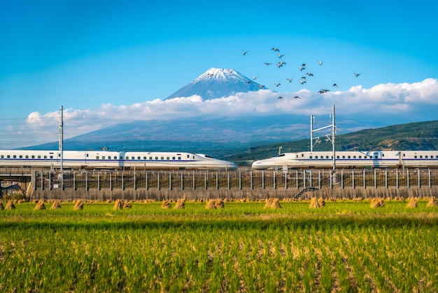 Mt. fuji with shinkansen train and rice field at shizuoka, japan.