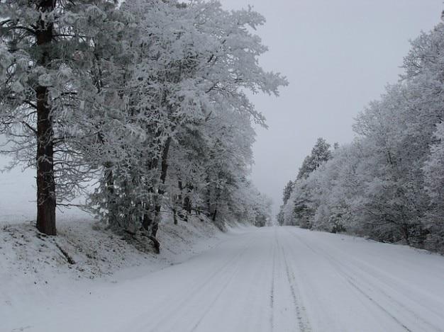 オレゴン州道mt雪フードの木がマウント