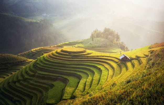 Рисовые поля на террасе mu cang chai, yenbai, вьетнам. вьетнамские пейзажи.