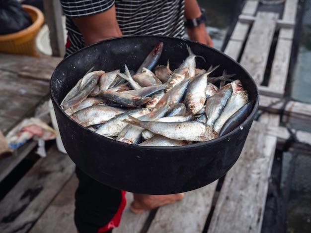 태국 남부의 섬에있는 바다에있는 어장 농장에서 먹이를주기 위해 현지 어부의 손에 검은 그릇에 담긴 많은 신선한 정어리 생선.