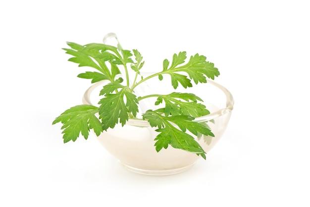 ヨモギまたはクソニンジンの枝の緑の葉は白で隔離されます。