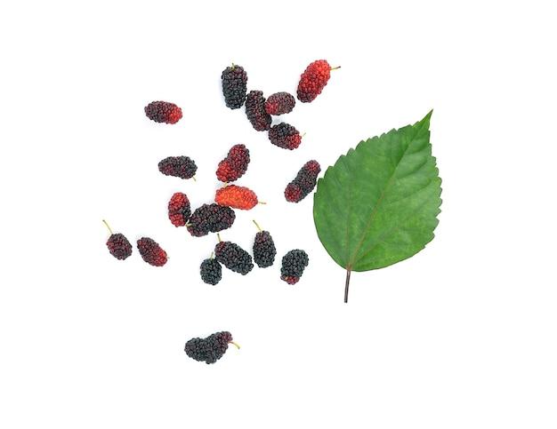 Плоды шелковицы и лист шелковицы на белой здоровой еде из фруктов шелковицы изолированы