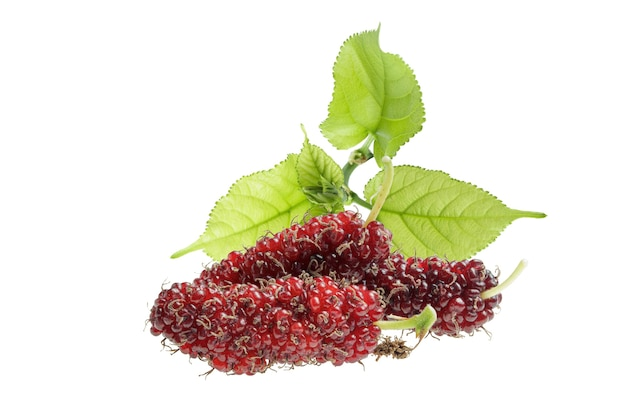 Mulberries with leaves isolated on white background.