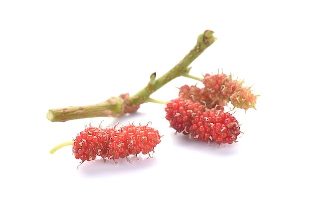 Макрос ягоды шелковицы