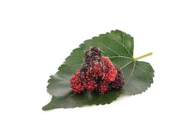 Mulberry isolated on white background with clipping path.
