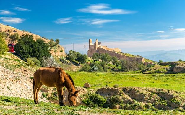フェズの牧草地のミュール-モロッコ