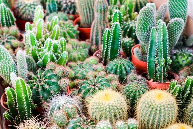Multi of cactus on dirt pot put on terrarium to decor and interior