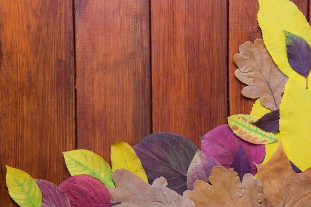 Multi-colored autumn leaves lie on a wooden brown background.
