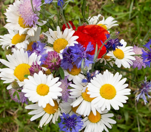 Multi-colored bouquet of wild wild flowers
