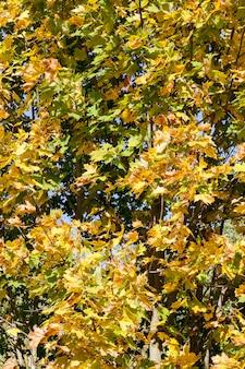 가을 시즌에 나무의 여러 가지 빛깔의 단풍, 화창한 아침에 아름다운 자연