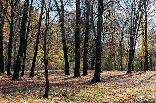 Разноцветная листва на деревьях в осенний сезон, гниющие листья на земле после осени, теплая погода