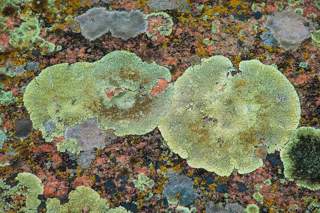 石のマルチカラーフラグメント菌のテクスチャ