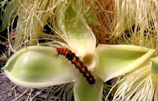 Multi-colored insect with feelers