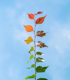 マルチカラーの葉の現象緑色の茶色の黄色のオレンジ色の赤