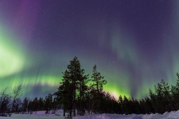 눈 덮인 숲을 통해 여러 가지 빛깔의 오로라