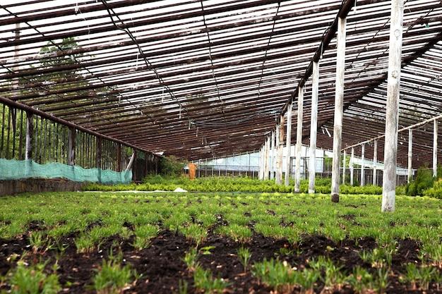 Разноцветные декоративные растения, кустарники и цветы, выращиваемые для садоводства в современной гидропонной теплице.