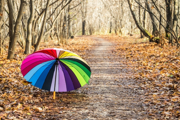 Multi-colored umbrella rests on fall leaves
