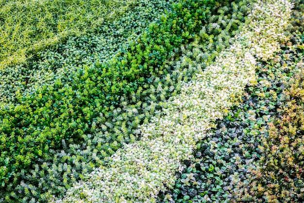Multicolor искусственная трава.