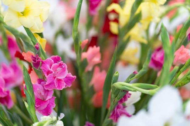 Разноцветные цветы гладиолуса в вазе