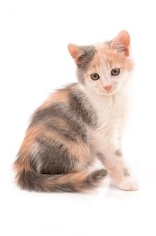 여러 가지 빛깔의 새끼 고양이