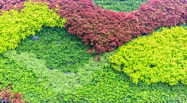 Multicolor leaves