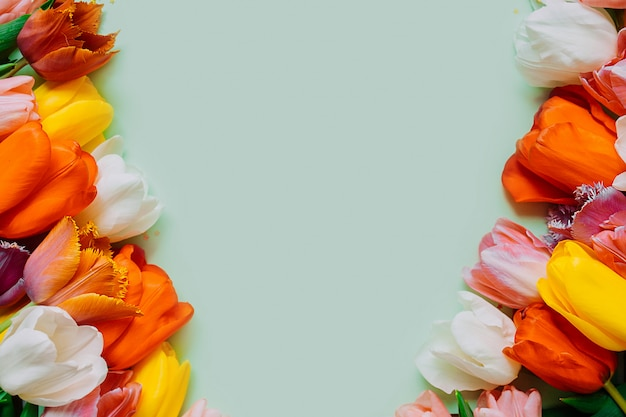 Разноцветные тюльпаны на синем фоне