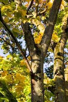 Разноцветные осенние деревья под солнечным светом