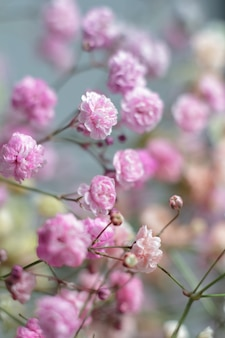 Multicolored bouquet of gypsophila flowers . minimal composition of gypsophila flowers on pale pastel background.