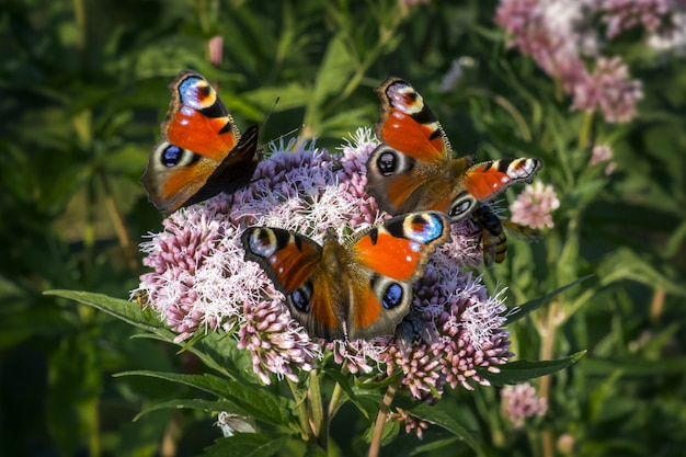 Multicolored butterflies close up