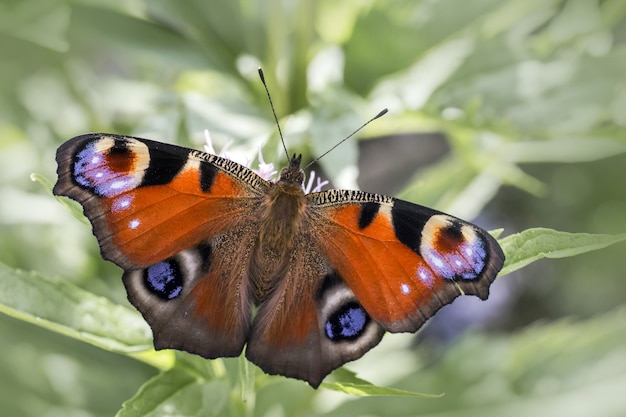 Multicolored butterfly close up