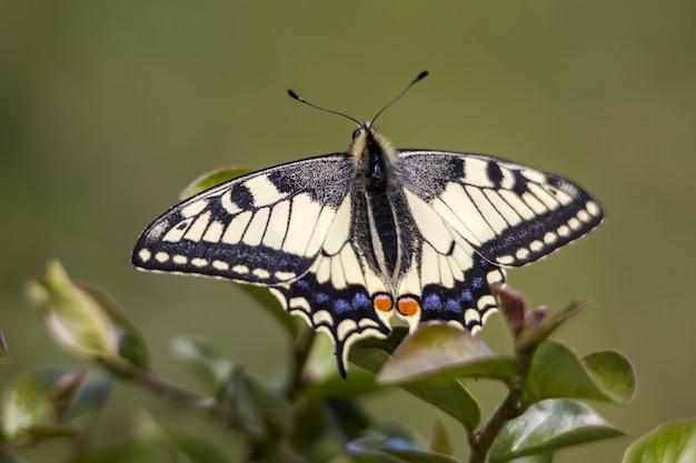 Разноцветная бабочка на листе