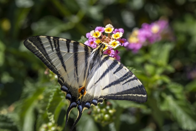 Multicolored butterfly sitting on flower