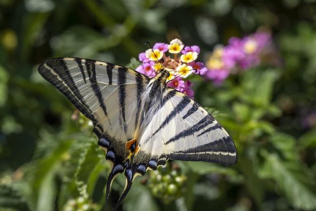Разноцветная бабочка сидит на цветке