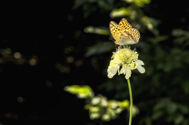 Разноцветная бабочка сидит на вершине желтого цветка