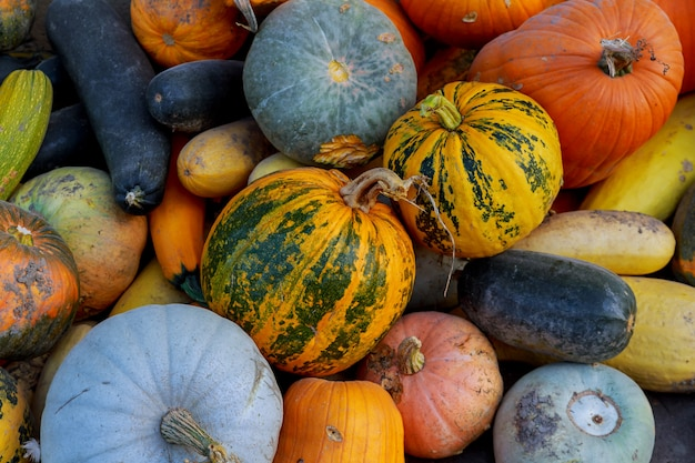 Multicolored different vegetables in the box, thanksgiving harvest: pumpkins, gourds