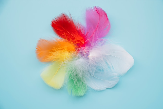 Multicolored feathers in circle
