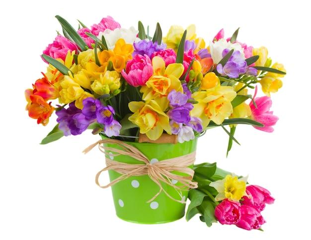 色とりどりのフリージアと水仙の花