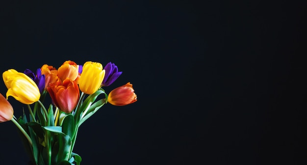 Multicolored holiday flowers tulips