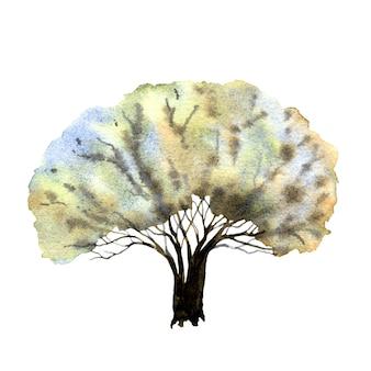 白い背景の上の色とりどりの古いオーク。手描きの冬の木。水彩イラスト。