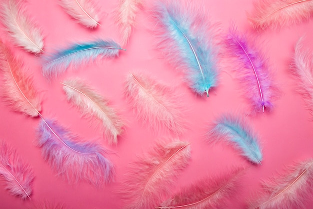 ピンクの表面の明るさと風通しの良いコンセプトに鳥の羽の色とりどりのピンクとブルーの羽