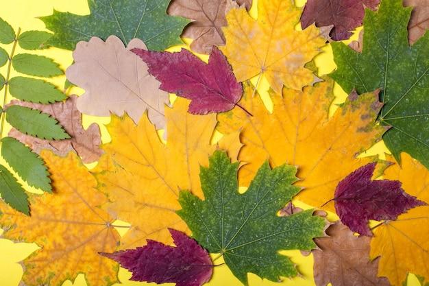 Разноцветные красные, оранжевые, зеленые сухие опавшие осенние листья на желтом фоне. красочное изображение опавших осенних листьев идеально подходит для сезонного использования.