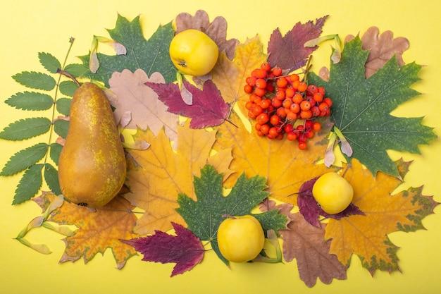 Разноцветные красные, оранжевые, зеленые сухие опавшие осенние листья, груши и желтые яблоки и оранжевые ягоды рябины на желтом фоне. красочное изображение опавших осенних листьев идеально подходит для сезонного использования.
