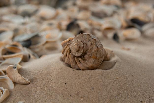 Разноцветные речные ракушки хаотично лежат на песке у моря