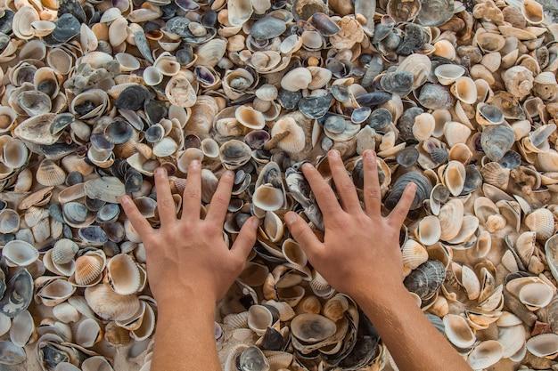 色とりどりの川の貝殻が海の隣の砂の上に無秩序に横たわっています