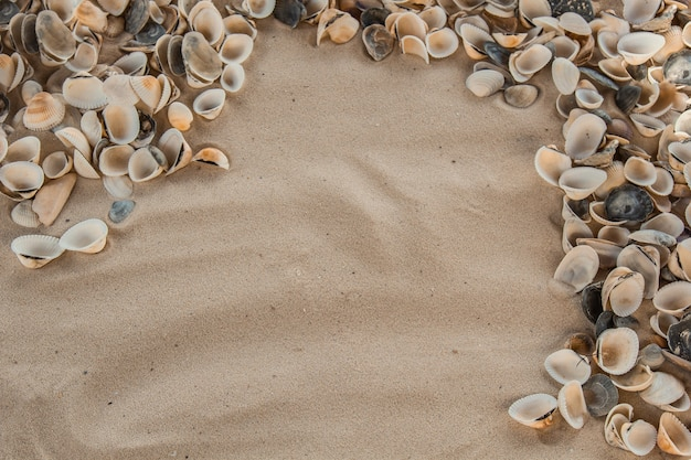 Multicolored river seashells lie chaotically on the sand next to the sea