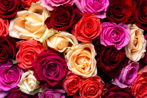 Multicolored roses for valentine's day