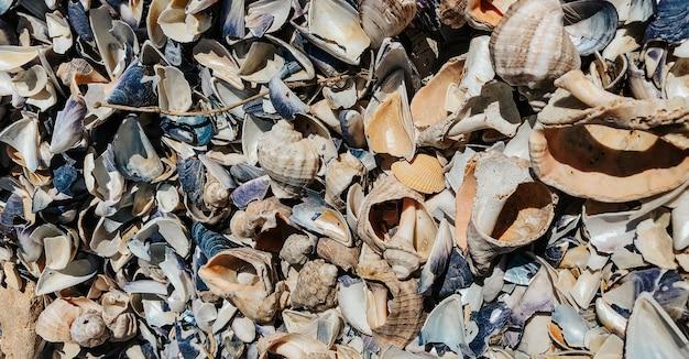 黒海ルーマニアからの色とりどりの貝殻。夏の背景パターンテンプレートモックアップ